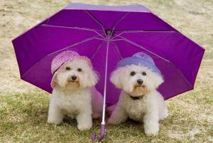 Bella and Rosie under umbrella